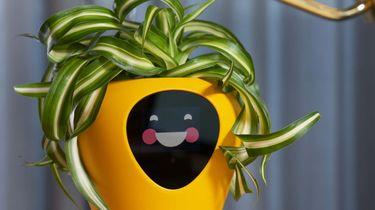 Lüa plantenpot