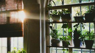 tips overleven kamerplanten winter