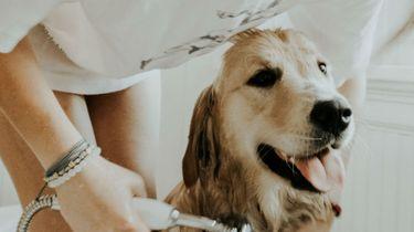 hond gelukkig