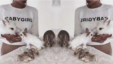 konijnen knuffelen in belgië