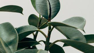 plant snurken