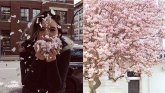 mooiste steden lente
