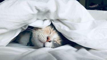 effecten lichaam genoeg slaap (geld verdienen met slapen)