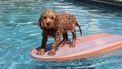 honden zwemvest zeemeermin