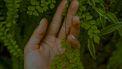 nagelriemen-plukken