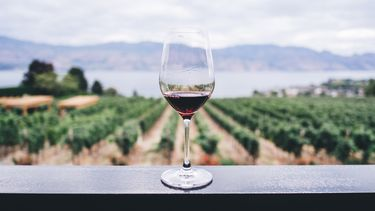 fontein met gratis wijn