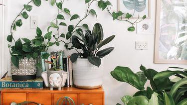 fouten die je maakt bij het verzorgen van je planten