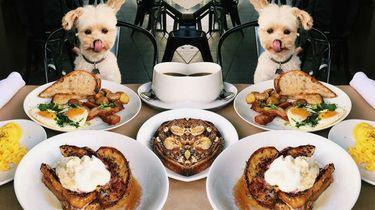 diner voor honden