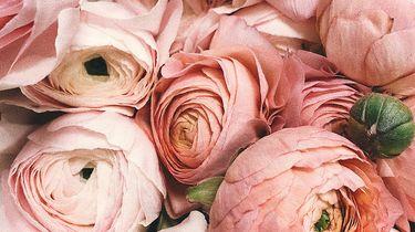 rozen beautyproducten