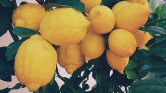 lidl folder citrusboom